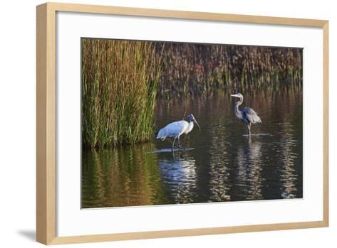 Wood Stork-Gary Carter-Framed Art Print