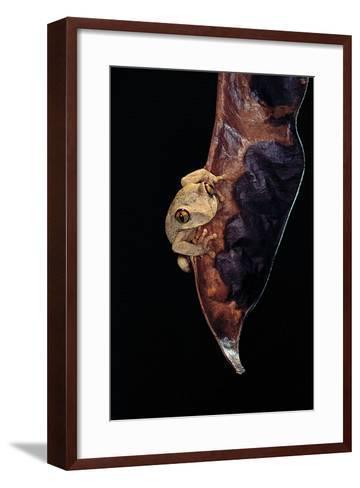 Leptopelis Sp. (Forest Treefrog )-Paul Starosta-Framed Art Print