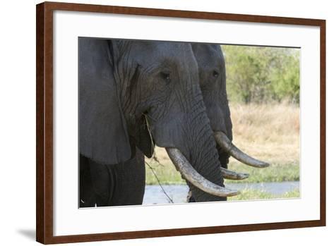 African Elephant-Sergio Pitamitz-Framed Art Print