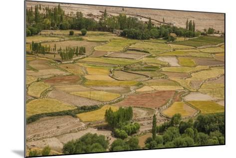 Chemde Monastery, near Karu, Corn Field around Monastery-Guido Cozzi-Mounted Photographic Print
