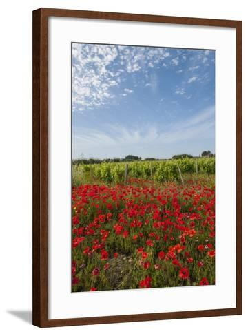 Vineyards near Ettore E Infersa Salt Works Area-Guido Cozzi-Framed Art Print