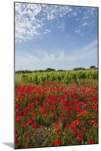 Vineyards near Ettore E Infersa Salt Works Area-Guido Cozzi-Mounted Photographic Print