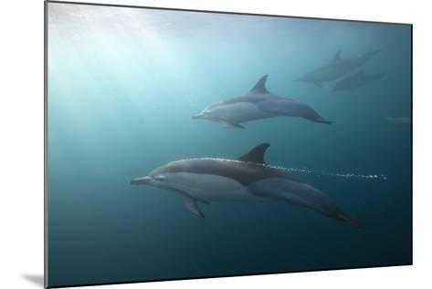 Long-Beaked Dolphin (Delphinus Capensis)-Reinhard Dirscherl-Mounted Photographic Print