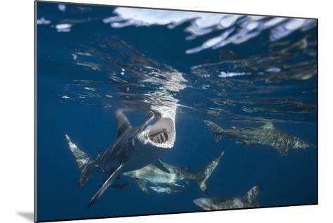 Blacktip Sharks (Carcharhinus Limbatus)-Reinhard Dirscherl-Mounted Photographic Print