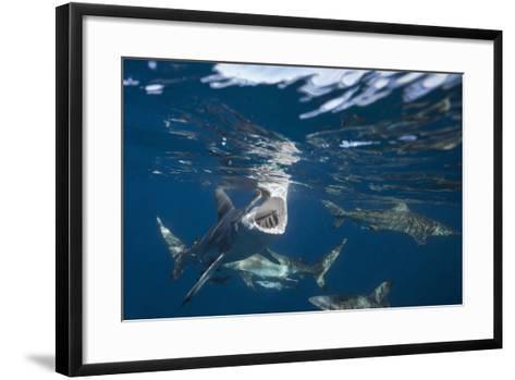 Blacktip Sharks (Carcharhinus Limbatus)-Reinhard Dirscherl-Framed Art Print