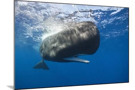 Sperm Whale (Physeter Macrocephalus)-Reinhard Dirscherl-Mounted Photographic Print