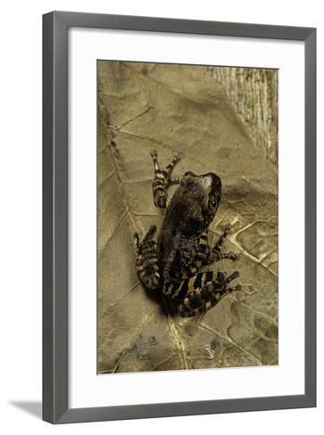 Phlyctimantis Boulengeri-Paul Starosta-Framed Art Print