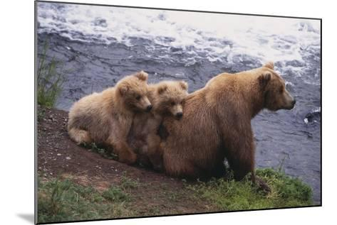 Grizzly Cubs with Mother by River-DLILLC-Mounted Photographic Print