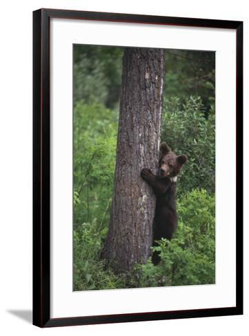 Grizzly Cub on Tree-DLILLC-Framed Art Print