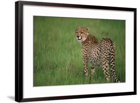 Cheetah Standing in Grass-DLILLC-Framed Art Print