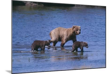 Grizzly Cubs with Mother in River-DLILLC-Mounted Photographic Print