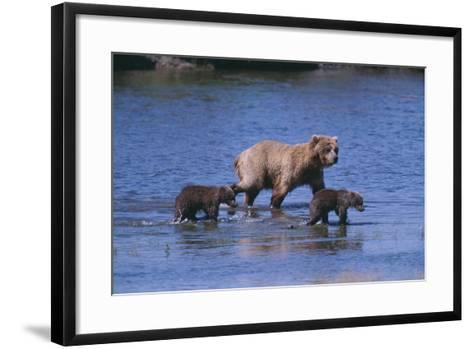 Grizzly Cubs with Mother in River-DLILLC-Framed Art Print