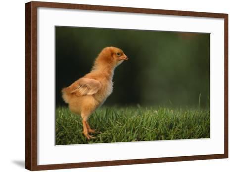 New Chick-DLILLC-Framed Art Print