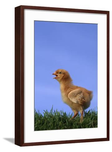 Chirping Chick-DLILLC-Framed Art Print