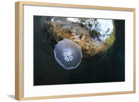 Jellyfish below the Surface-Bernard Radvaner-Framed Art Print