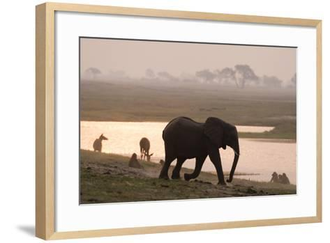 African Elephant Running to the River-Sergio Pitamitz-Framed Art Print