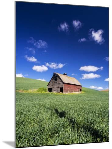 Old Red Barn in a Field of Spring Wheat-Terry Eggers-Mounted Photographic Print