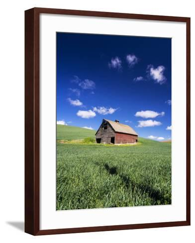 Old Red Barn in a Field of Spring Wheat-Terry Eggers-Framed Art Print