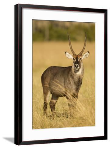 Defassa Waterbuck Portrait-Joe McDonald-Framed Art Print
