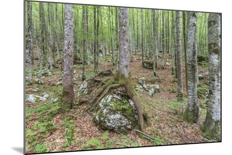 Mountain Forest-Rob Tilley-Mounted Photographic Print