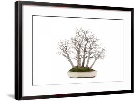 Bonsai-Fabio Petroni-Framed Art Print