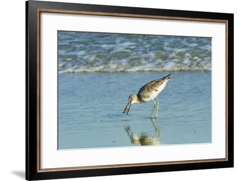 Willet;-Gary Carter-Framed Art Print