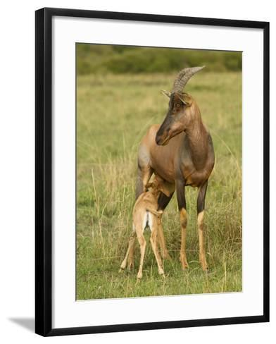 Topi and Nursing Baby-Joe McDonald-Framed Art Print