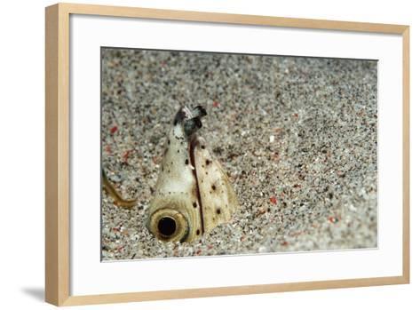 Dark-Shouldered Snake Eel Head in the Sandy Ocean Floor-Reinhard Dirscherl-Framed Art Print