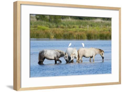 Camargue Wild Horses-Sergio Pitamitz-Framed Art Print