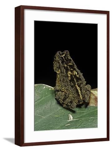 Bufo Sp.-Paul Starosta-Framed Art Print