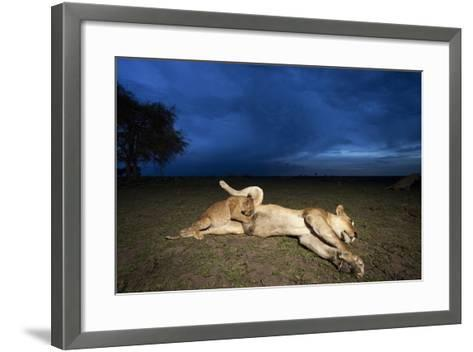 Lioness and Cub-Paul Souders-Framed Art Print