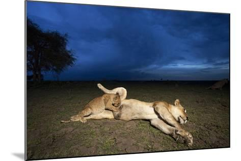 Lioness and Cub-Paul Souders-Mounted Photographic Print