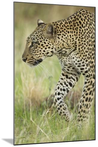 African Leopard-Mary Ann McDonald-Mounted Photographic Print