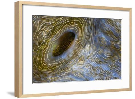 Close-Up of Great Clam Mantle-Reinhard Dirscherl-Framed Art Print