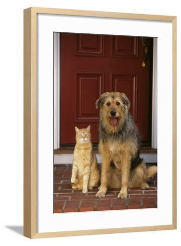 Cat and Dog Waiting in Front of Door-DLILLC-Framed Art Print