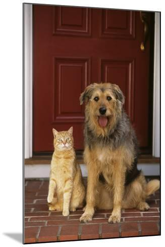 Cat and Dog Waiting in Front of Door-DLILLC-Mounted Photographic Print