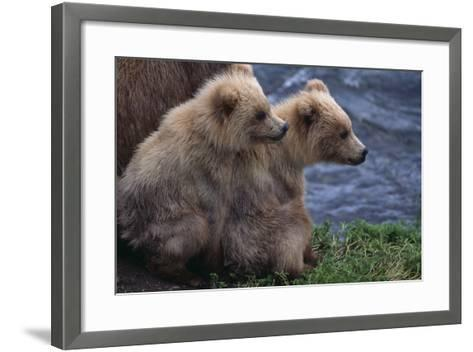 Grizzly Cubs with Mother by River-DLILLC-Framed Art Print