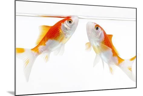 Goldfish Swimming in Water-Herbert Kehrer-Mounted Photographic Print