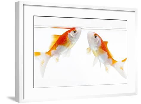 Goldfish Swimming in Water-Herbert Kehrer-Framed Art Print