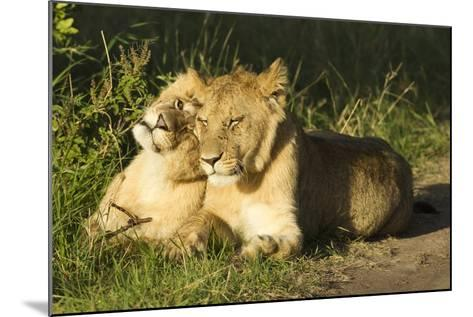 African Lion Cubs-Mary Ann McDonald-Mounted Photographic Print