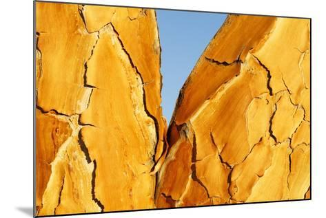 Quiver Tree Bark-Richard Du Toit-Mounted Photographic Print