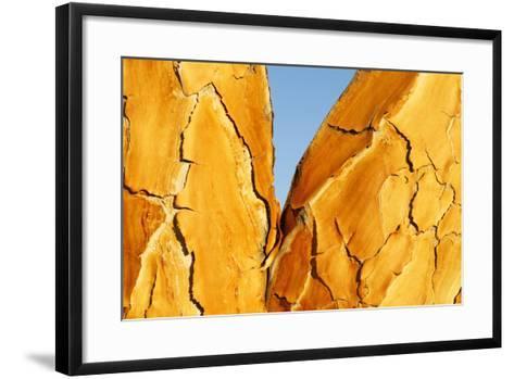 Quiver Tree Bark-Richard Du Toit-Framed Art Print