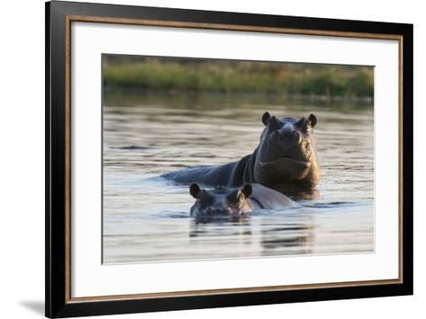 Hippopotamuses-Sergio Pitamitz-Framed Art Print