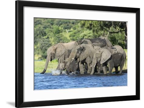 African Elephant Herd, Chobe National Park, Botswana-Paul Souders-Framed Art Print