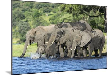 African Elephant Herd, Chobe National Park, Botswana-Paul Souders-Mounted Photographic Print