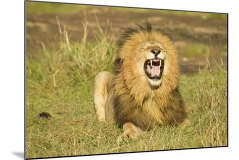 African Male Lion-Mary Ann McDonald-Mounted Photographic Print