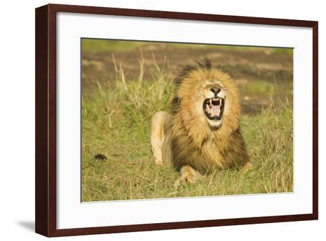 African Male Lion-Mary Ann McDonald-Framed Art Print