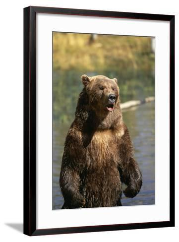 Grizzly Standing in Stream-DLILLC-Framed Art Print
