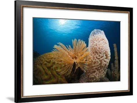 Fan Worm (Spirographis Spallanzanii), Tube Sponge, and Brain Coral on a Coral Reef-Reinhard Dirscherl-Framed Art Print