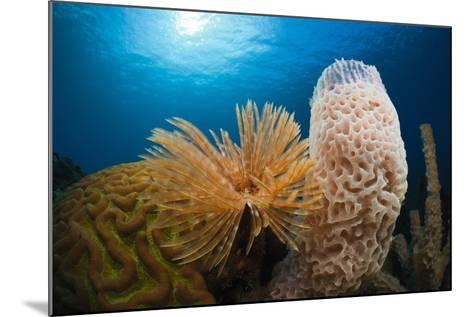 Fan Worm (Spirographis Spallanzanii), Tube Sponge, and Brain Coral on a Coral Reef-Reinhard Dirscherl-Mounted Photographic Print